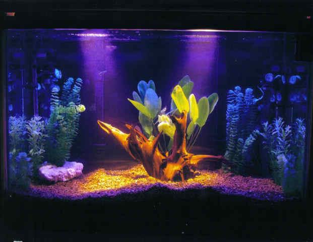 Fish n tips temperament fresh water fish for Cool freshwater fish for tanks