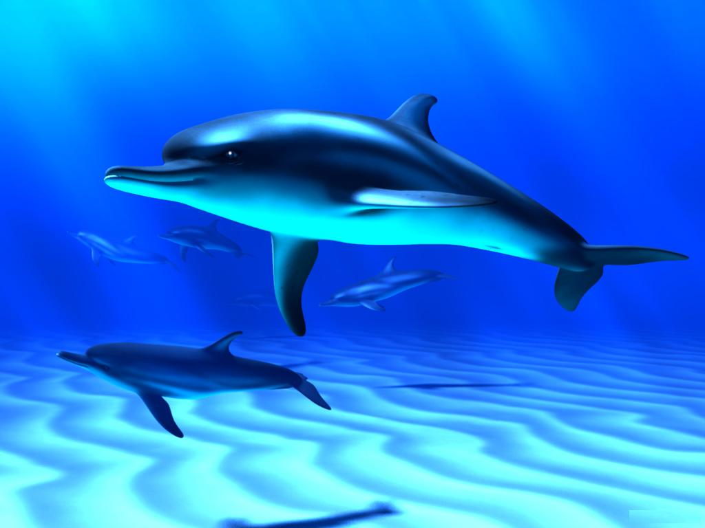 wallpaper dolphin wallpaper