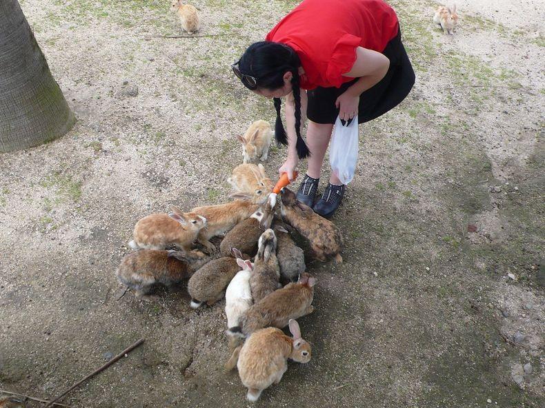 Isla Okunoshima - el paraíso del conejo
