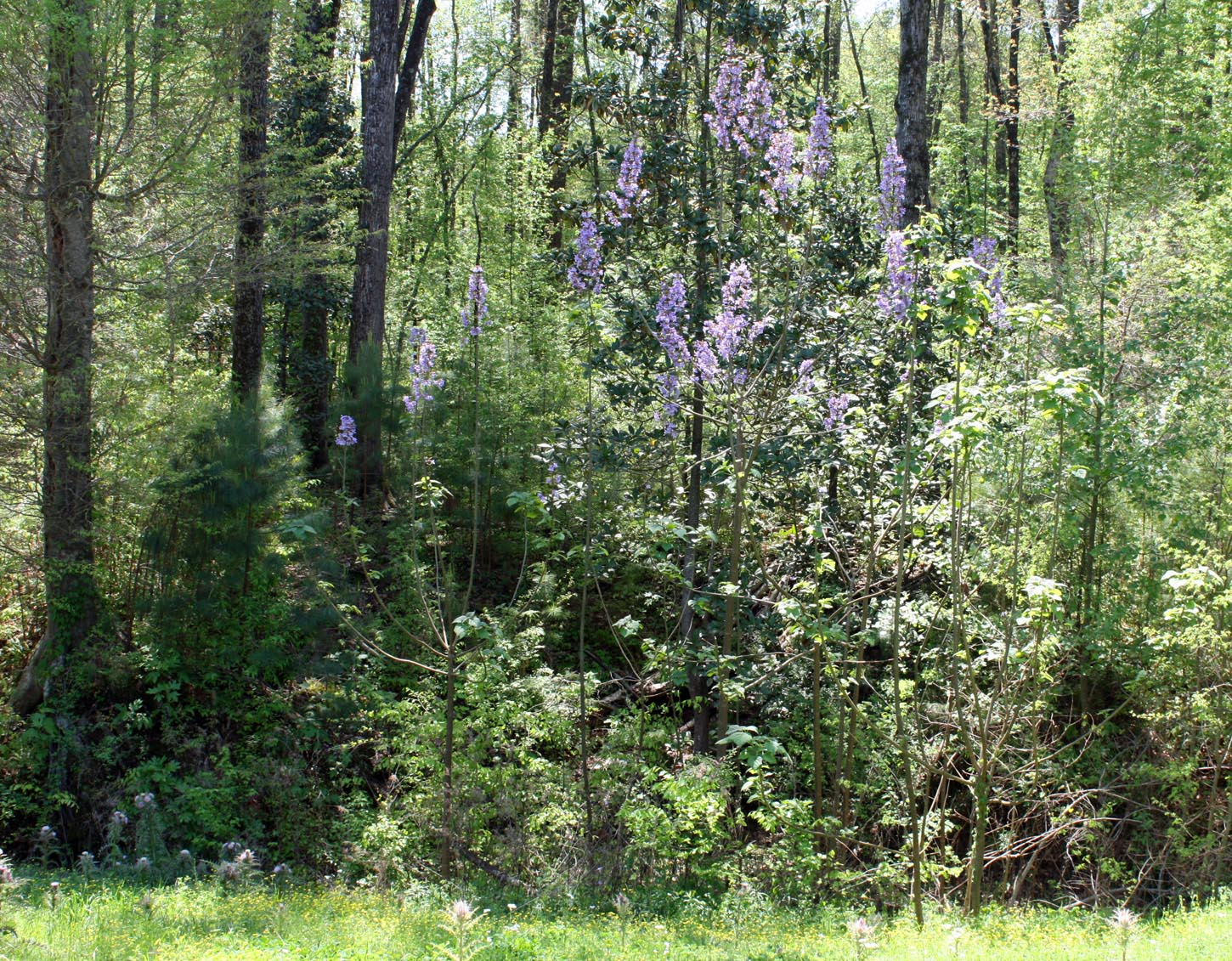 Southern Lagniappe Mystery Trees On The Trace