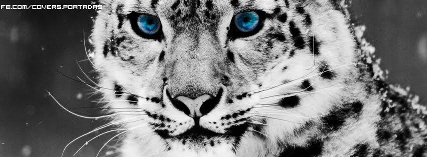 tigre-blanco-[portada para facebook]