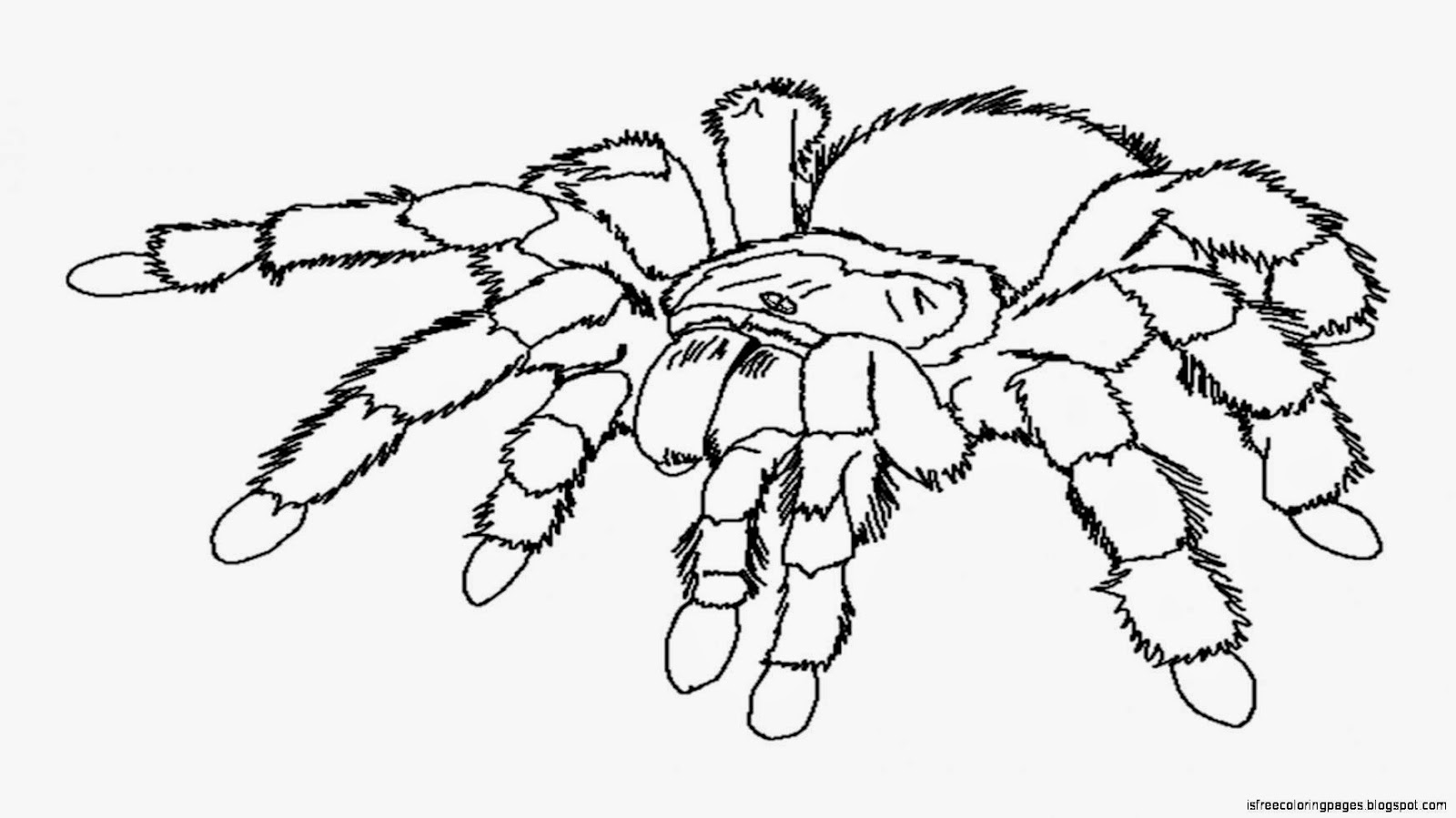 coloring pages tarantula - photo#16