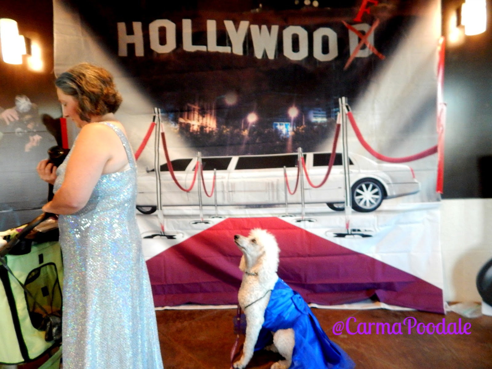 poodle on red carpet