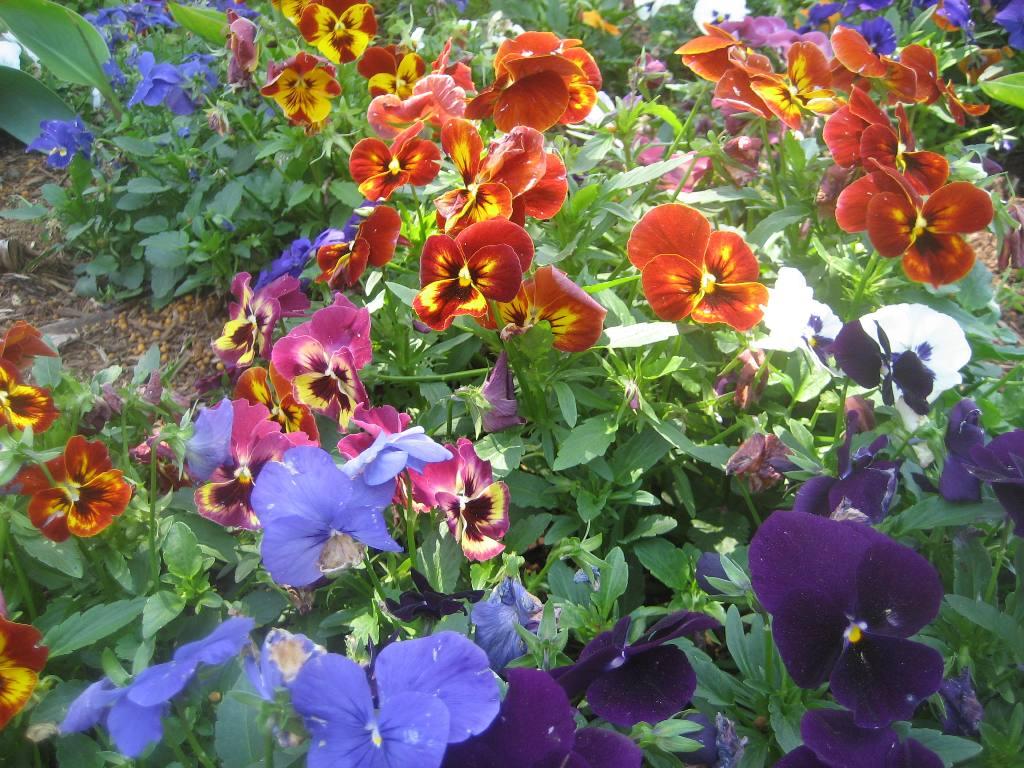bichonpawz Flowers Good for the Soul