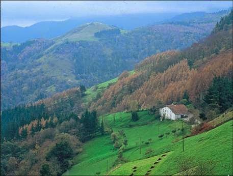 Blog jes s clima mediterr neo flora fauna y poblaci n for Clima mediterraneo de interior