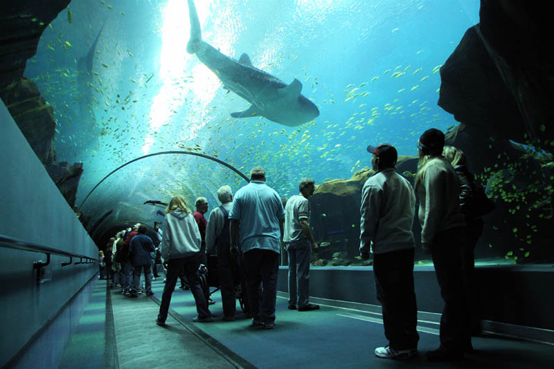 The World S Largest Aquarium Georgia Aquarium Likepage