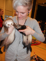 frettinäyttely ferret show Capital