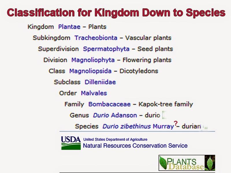 Taxonomy Classification Plants