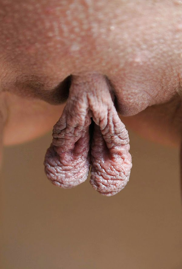 foto clitoris grande gratis: