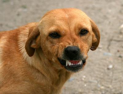 angry dog showing teeth.jpeg