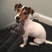 * Gracie * our 1yr old Jack Russell
