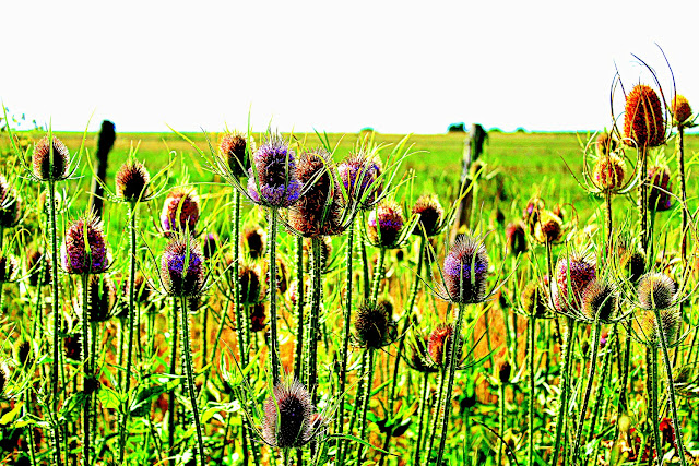 flowers in green field