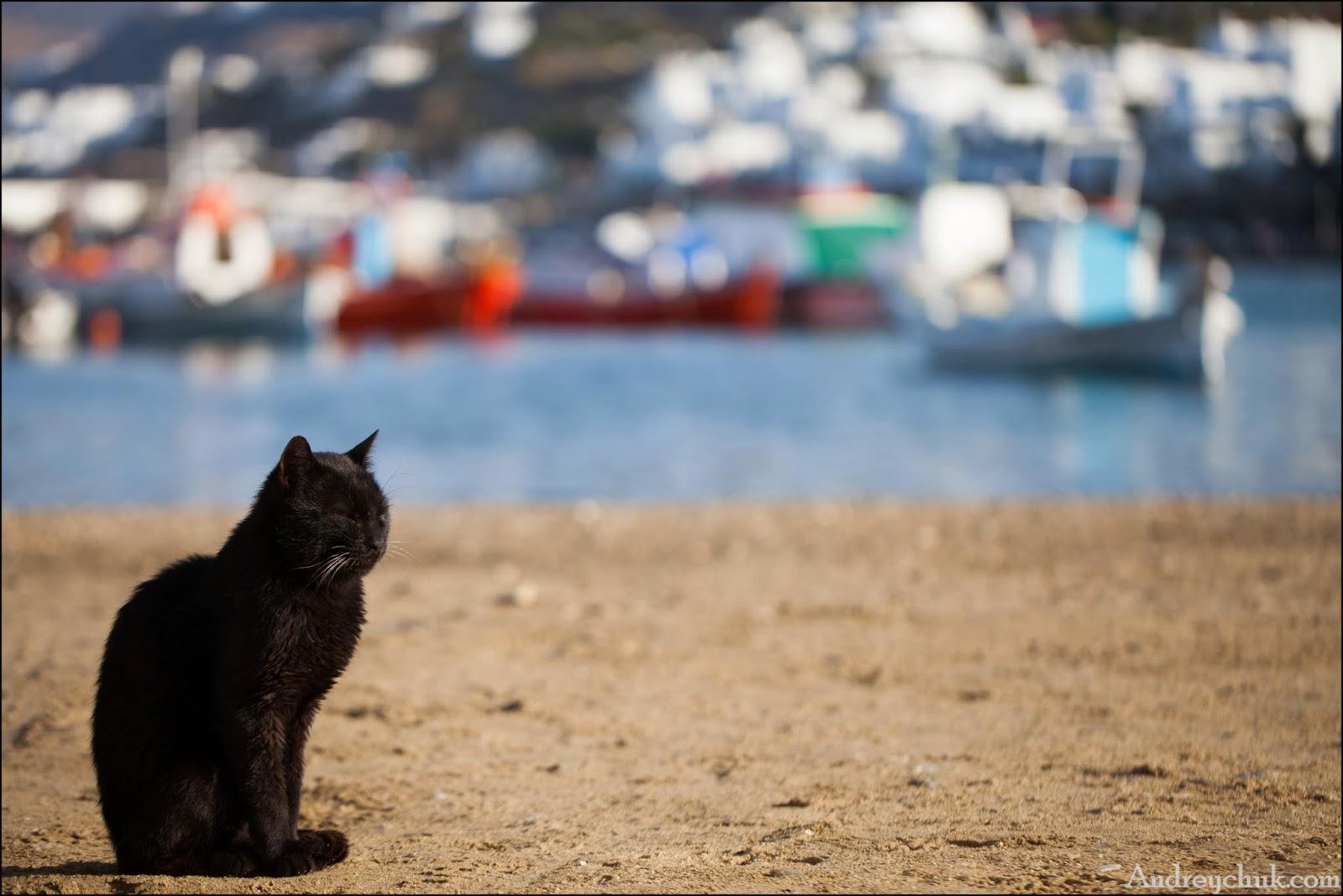 кошки о. Миконос