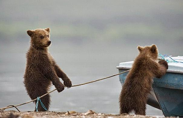 fotos de osos me vas a ayudar o te vas a quedar viendo