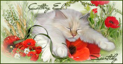 Cattery El Scartiky