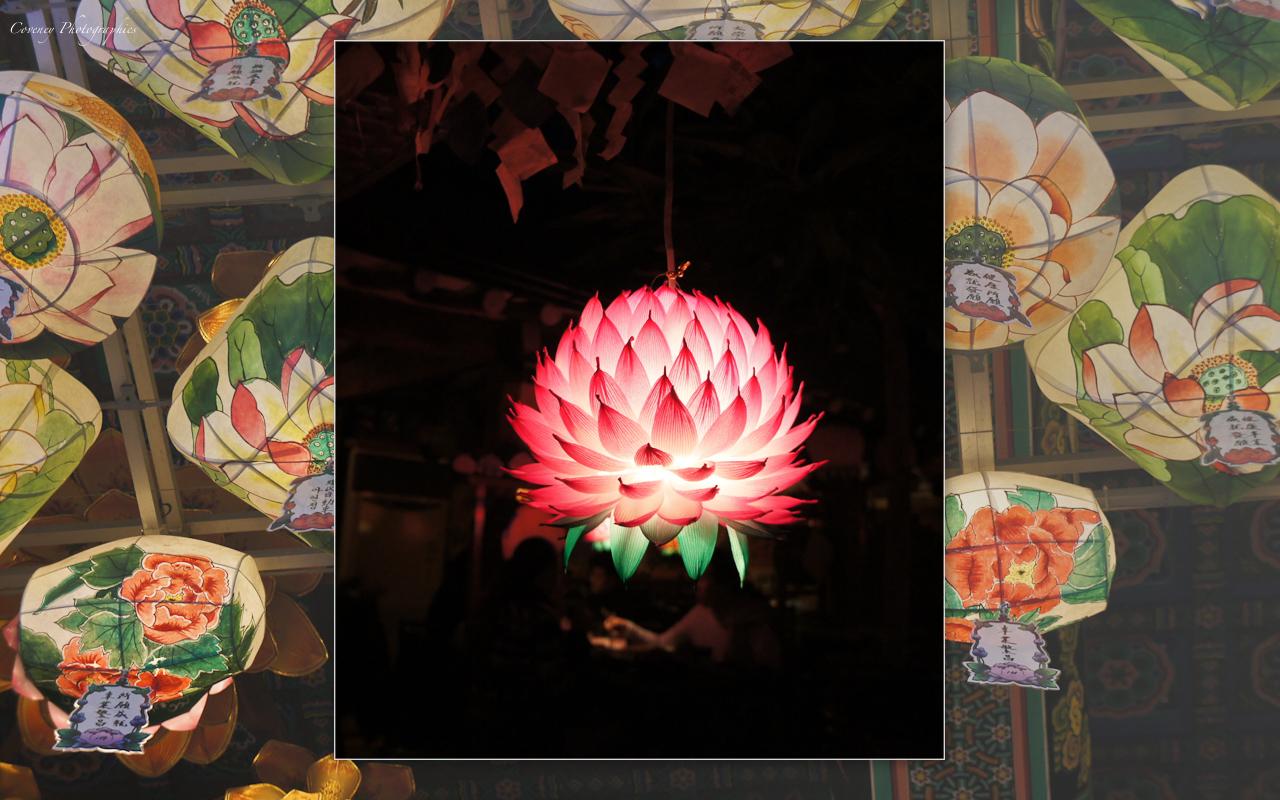 Lotus symbol in korean culture lotus lantern in a buddhist temple izmirmasajfo Image collections