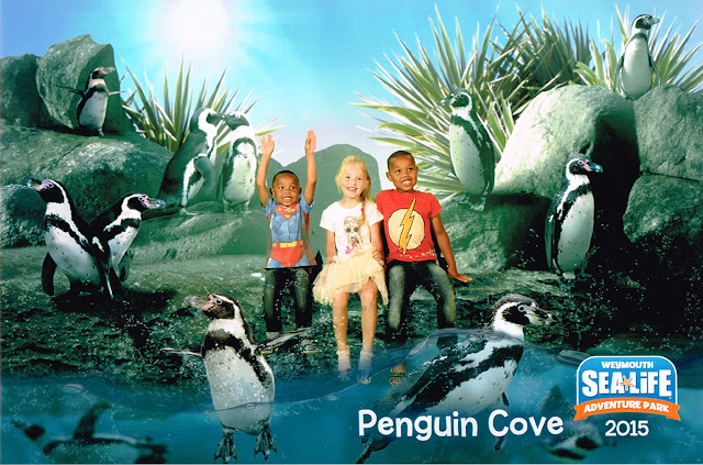 penguin-cove-sealife-weymouth-todaymywayblog