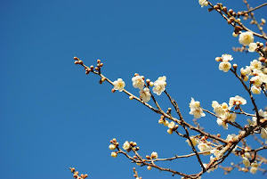 東京の不動産(土地・マンション・一戸建て)は売買スピードが早い Blogの花(白梅)