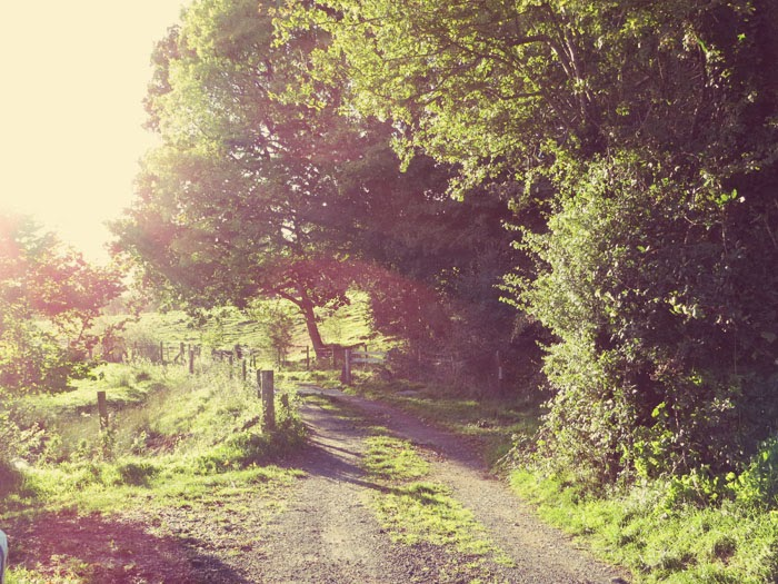 trees brecon beacons