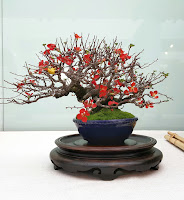Detalle de este bonsai marcando la estación