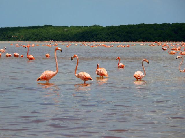Flamingos a perder de vista