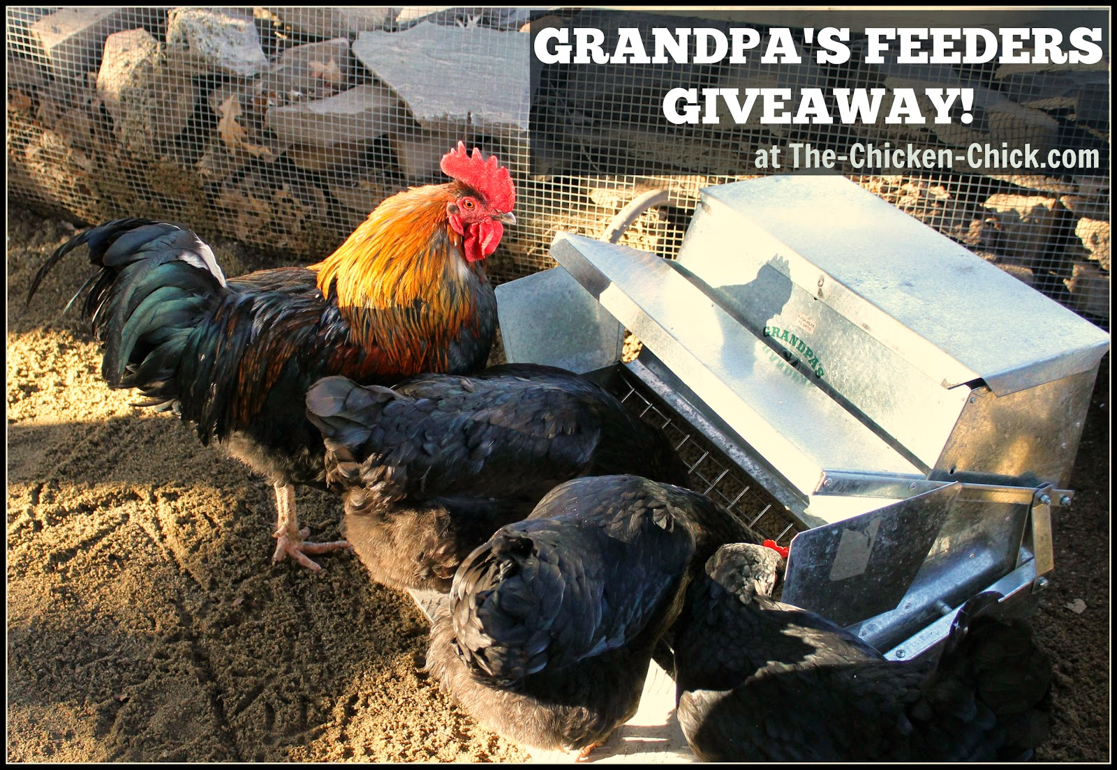 Grandpa's Feeders Giveaway at The-Chicken-Chick.com
