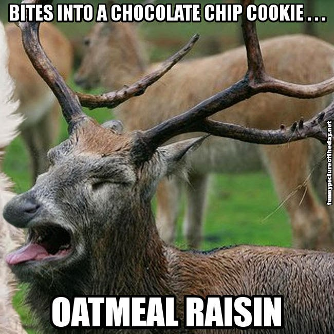 Bites Into A Chocolate Chip Cookie Oatmeal Raisin