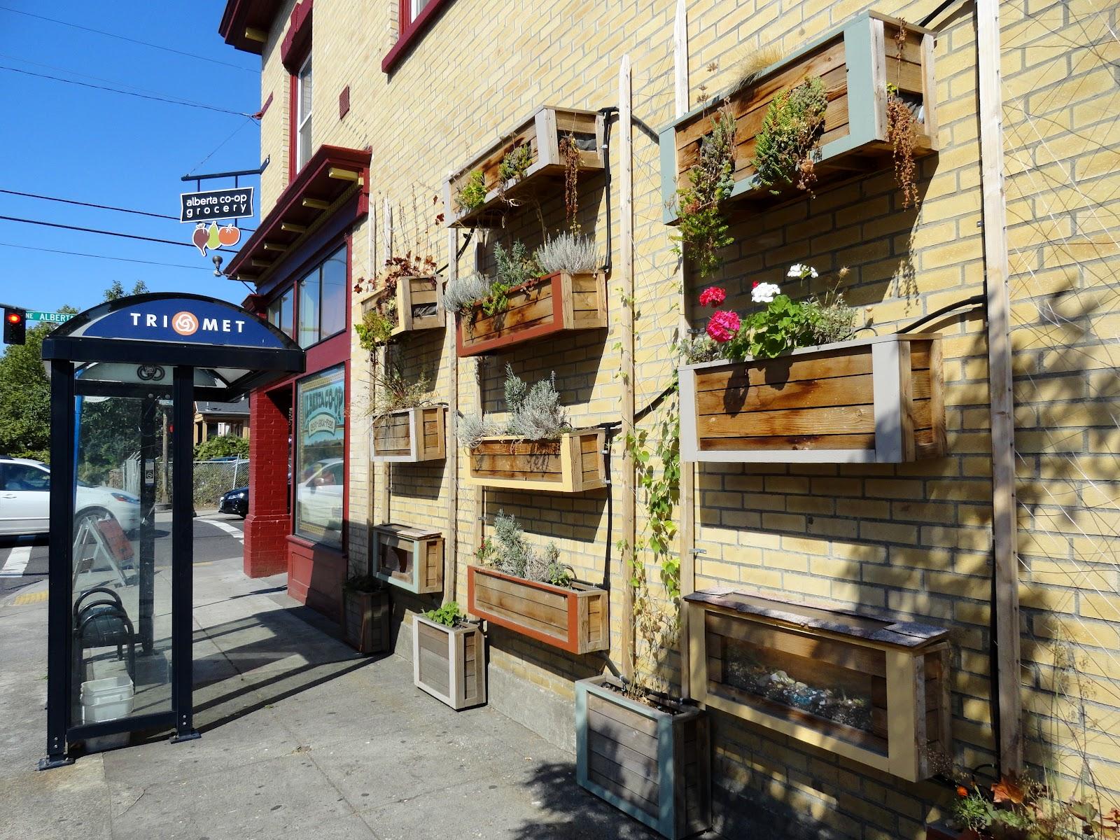danger garden: Alberta Co-op Grocery wall planters…