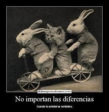 Frases De Amistad: No Importan Las Diferencias