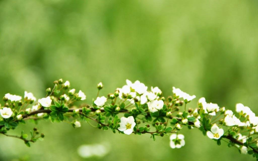 tải hình nền mùa xuân đẹp nhất