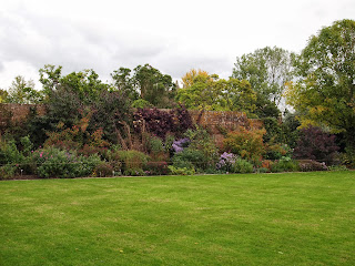 Gardens in London and Sussex, herbaceous border, asters