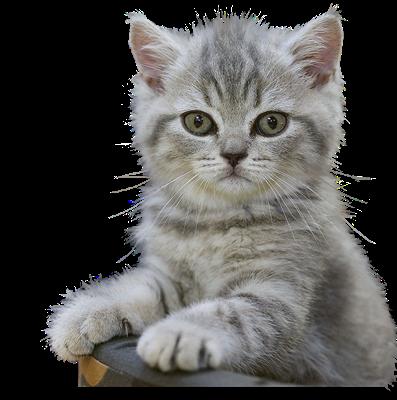 Výsledok vyhľadávania obrázkov pre dopyt gify png macskak