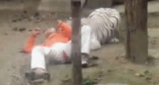 man jumps tiger cage china