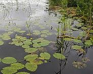 Foto cover Kader Richtlijn Water : resultaten monitoring 2013. Hoogheemraadschap van Rijnland