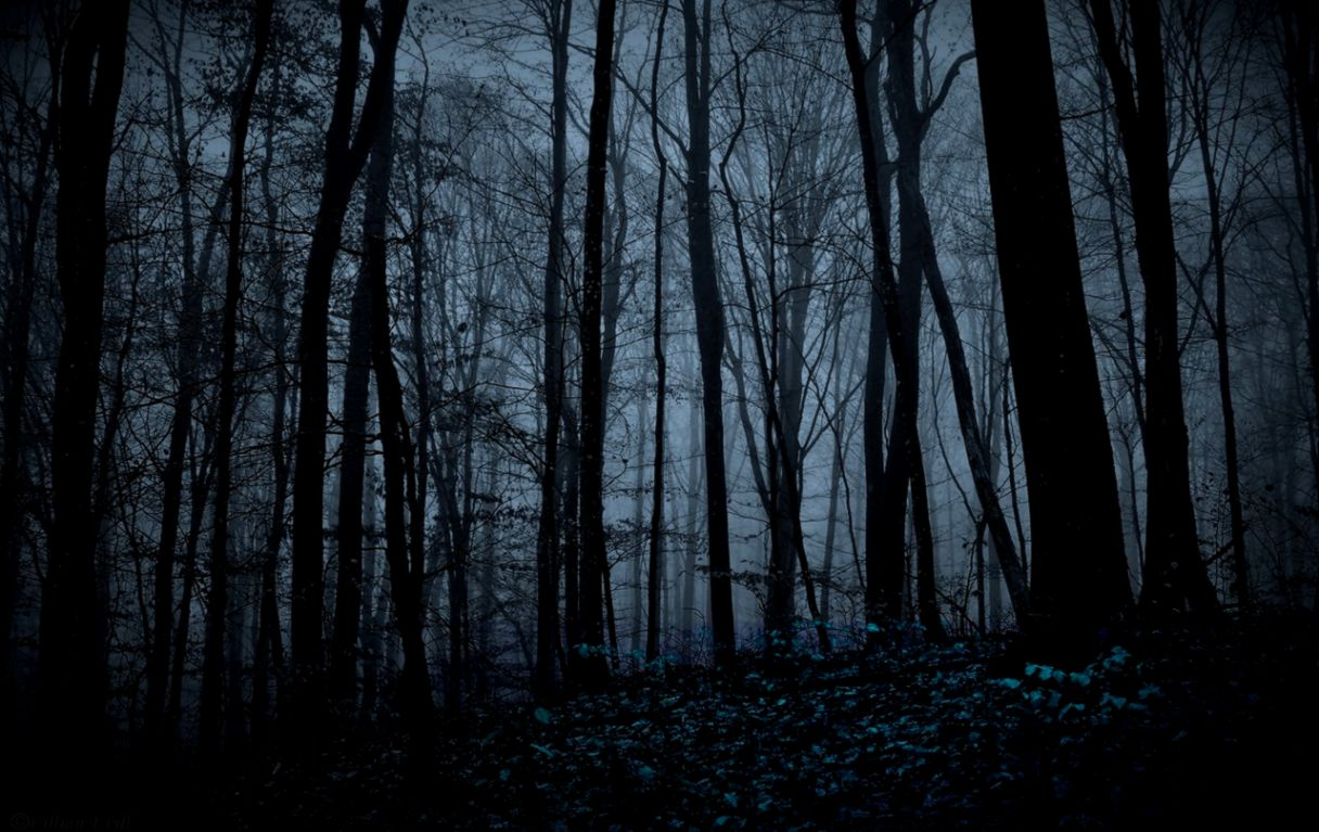 forest at night background amazing wallpapers