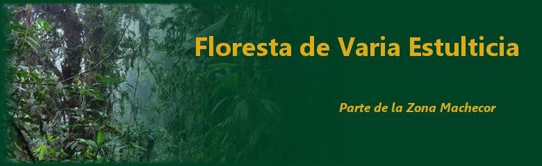 Floresta de varia estulticia
