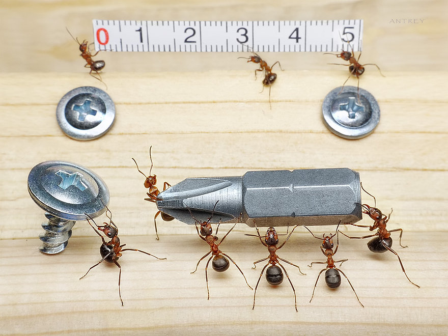 04-Grandpa-Helpers-Andrey-Pavlov-Photographs-of-Ants-an-Affordable-Journey-to-a-Parallel-World