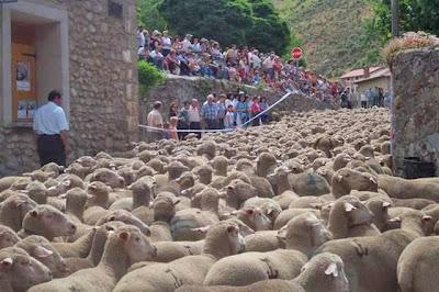 schapentocht Spanje
