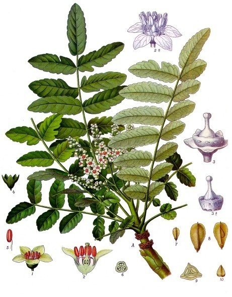 Aromatherapy Cures 2011