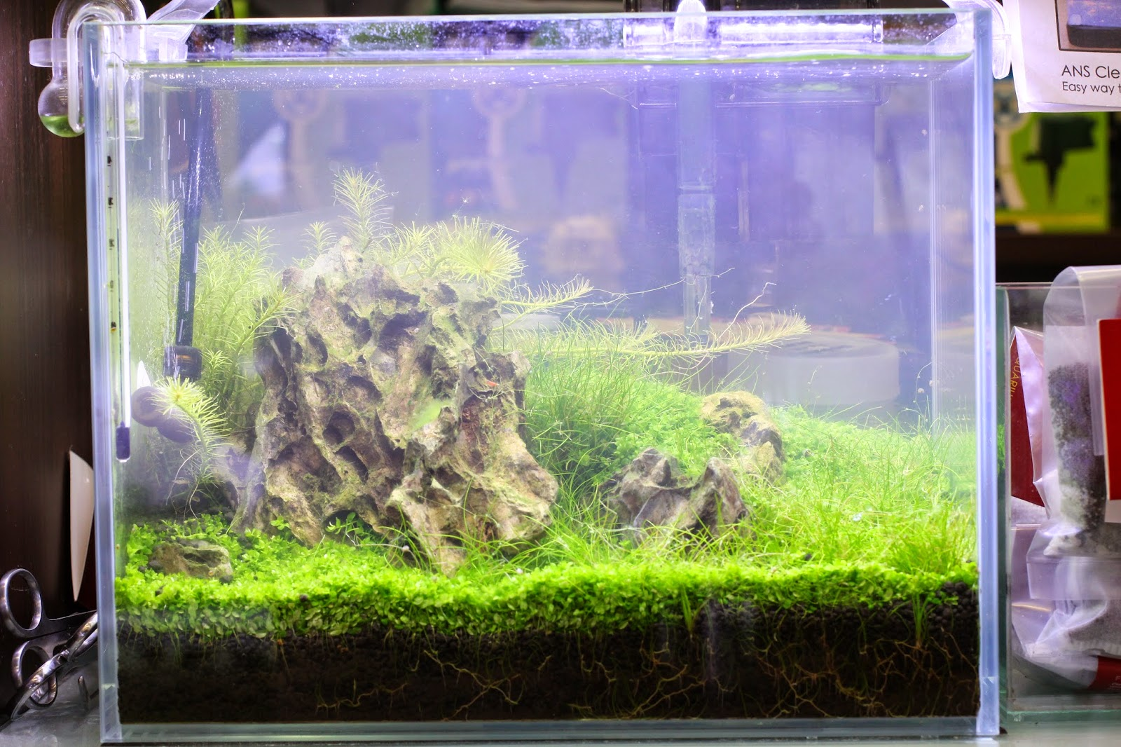 Freshwater fish tank has cloudy water - Ans Clearmax Is A Simple To Use Filter Media Suitable For Freshwater Planted And Marine Aquarium It Clears Cloudy Water