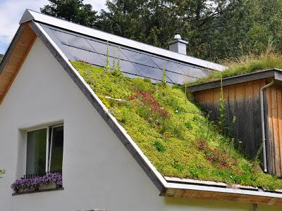 Крыша и травяной покров.