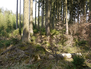 Bild 6: Grabhügel im Forstenrieder Park