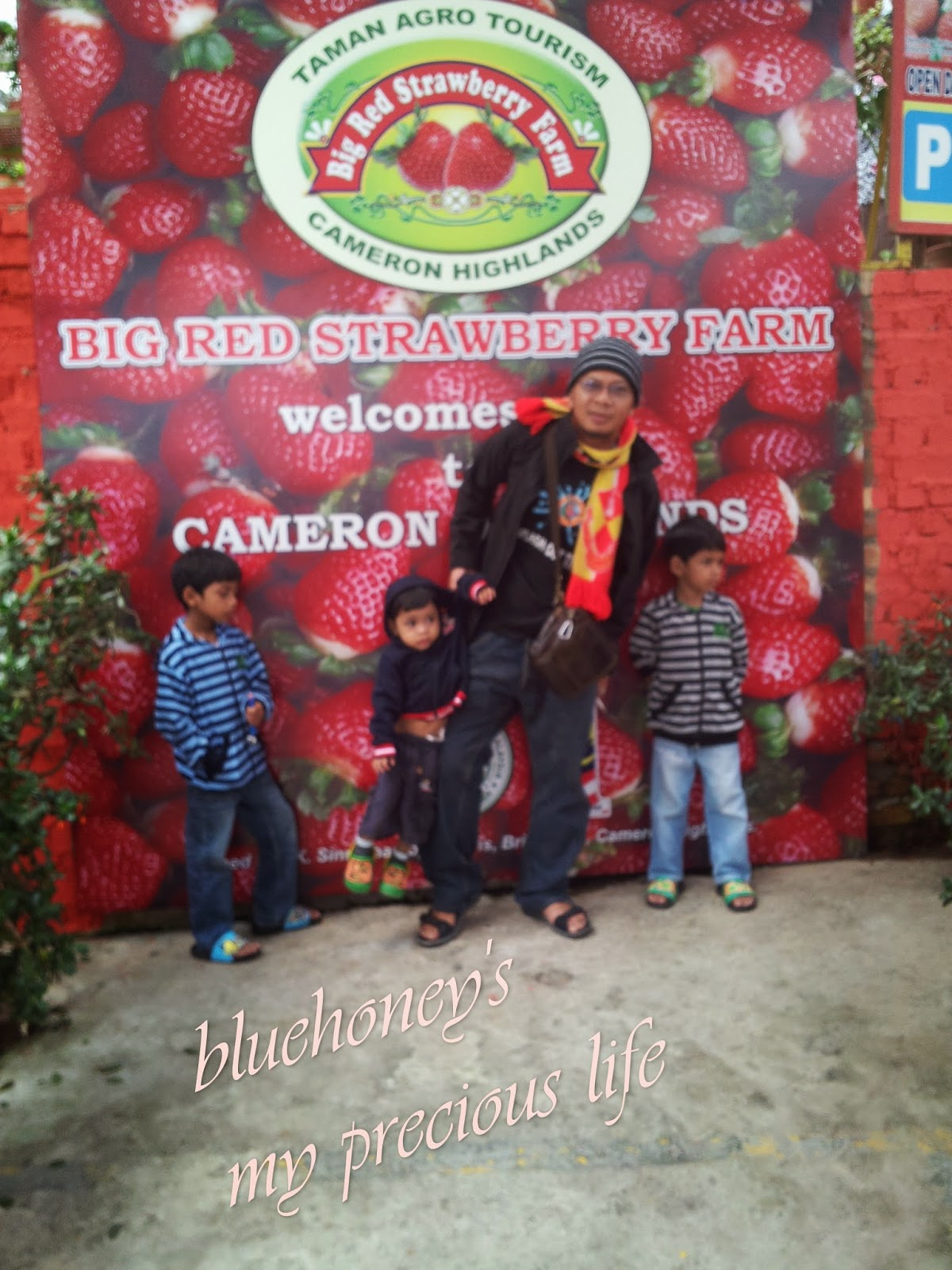 CAMERON HIGHLANDS PART II