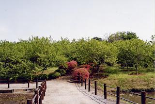 Vue d'un jardin du Parc de Koga de NAKAMURA Yoshio
