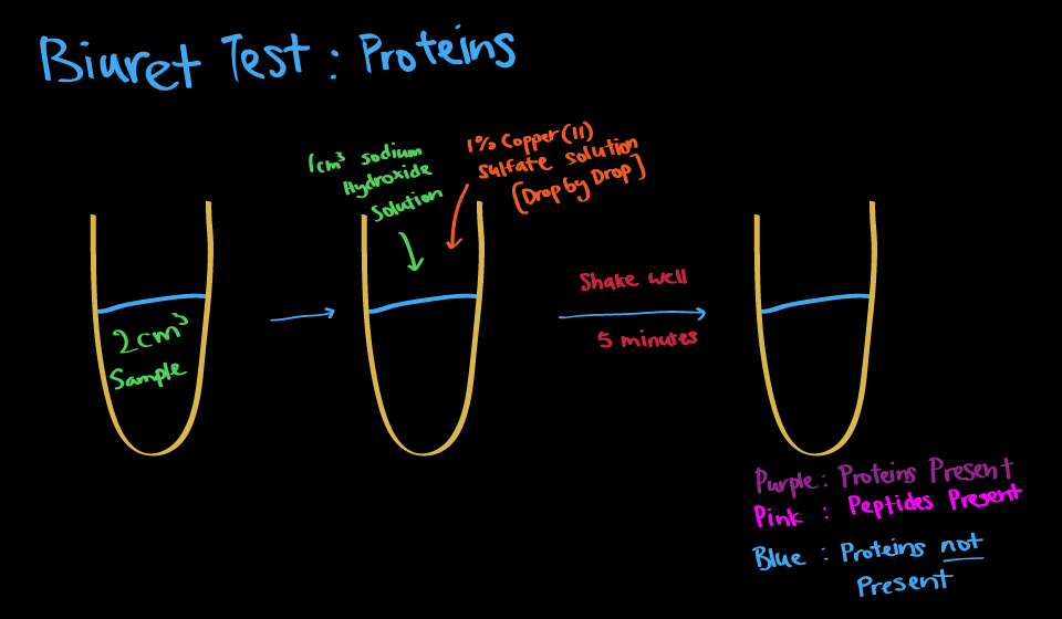 biruet test Practical quantitative determination of protein concentration using the biuret test  specific learning objectives to introduce general techniques for assaying.
