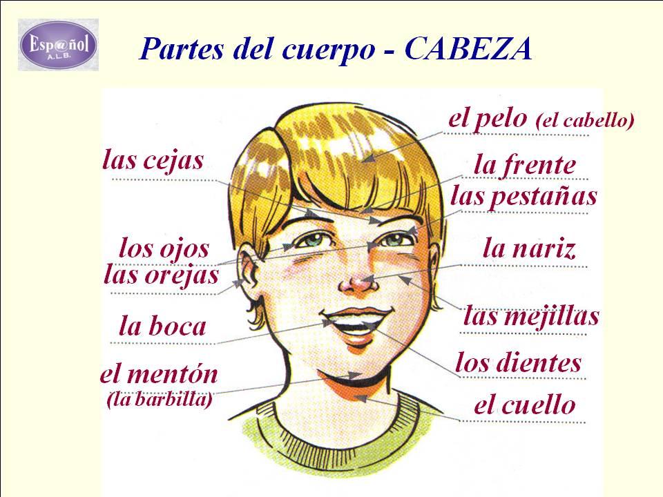 Esp@ñol ALB: tu clase de español por VIDEOCONFERENCIA (Skype): Esp ...
