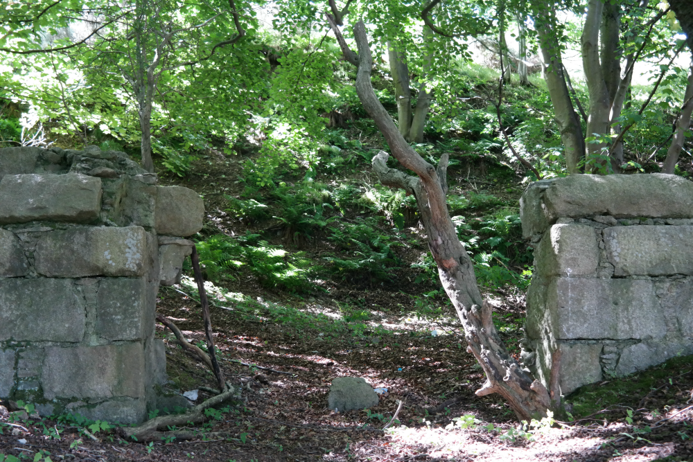 Old wall in the woods