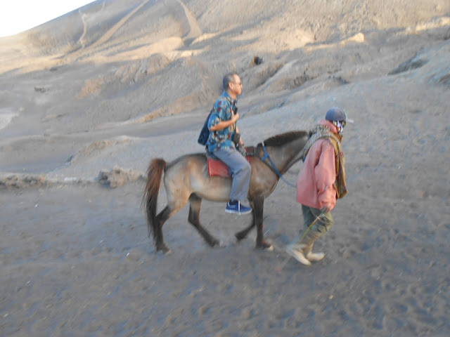Berkuda ternyata tidak gampang (Kuda Bromo)