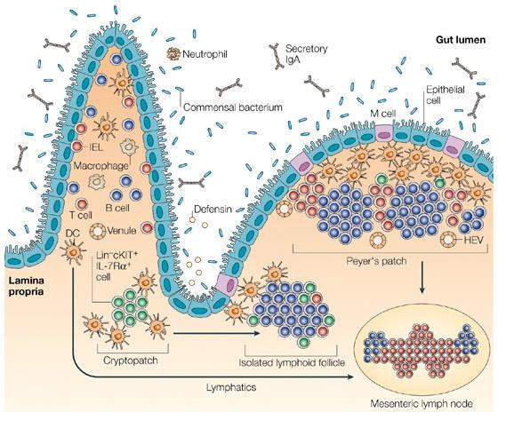Use of probiotics pdf najednou