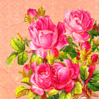 stock avatar rose images